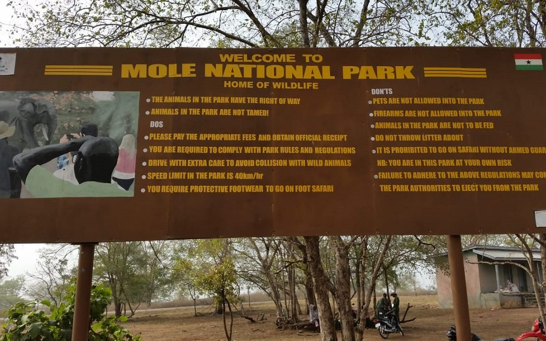 Olifanten in Ghana bij Mole national park