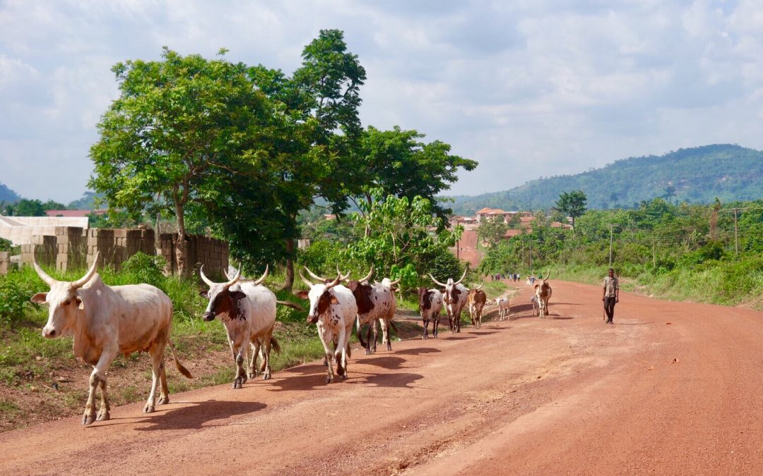 Walking in Ghana! 5 times Moon&Star guesthouse hiking inspiration