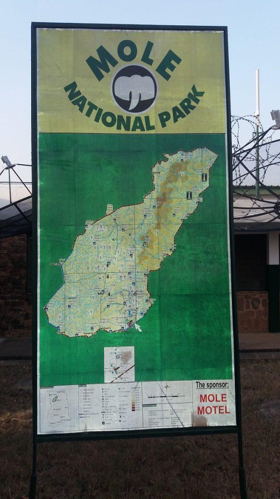 On safari at Mole national park in Ghana