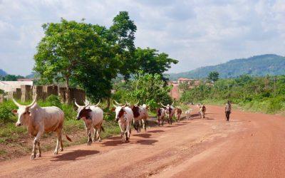 Wandelen in Ghana! 5 keer Moon&Star guesthouse wandel inspiratie