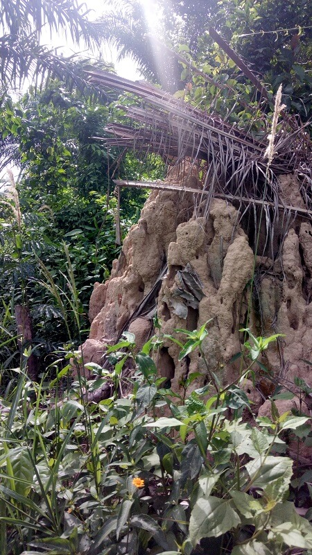 termite mound in Ghana