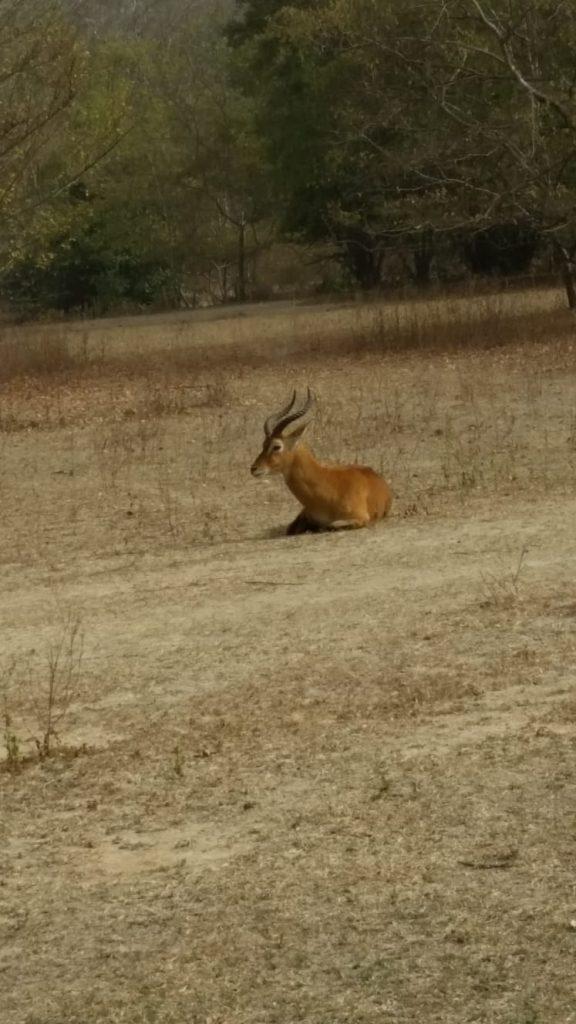 wildlife in Ghana