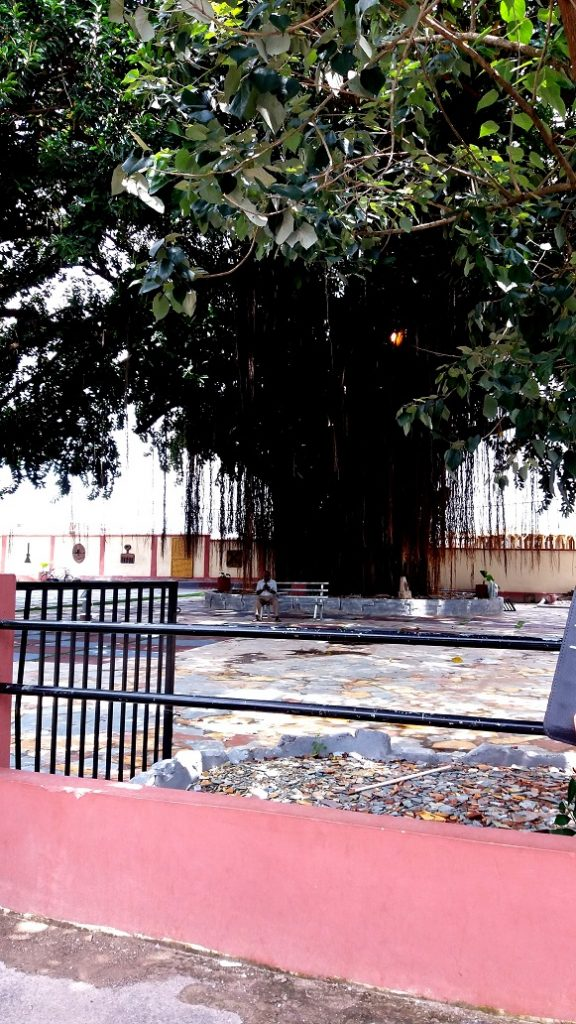 Manhya palace, Kumasi, een boom vol spirits