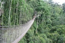 Jungle in Ghana