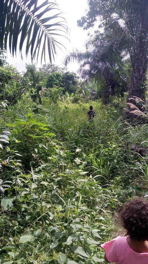 wandelen door de jungle in Ghana, Banko