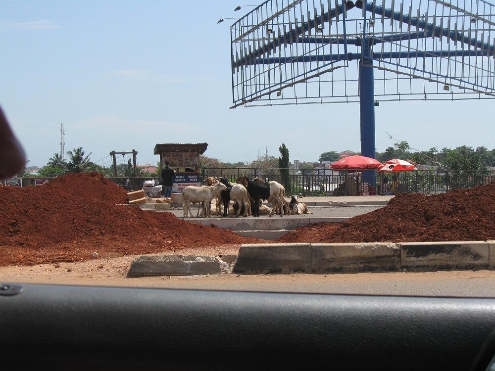 Ghana reizen, je komt van alles tegen op de weg