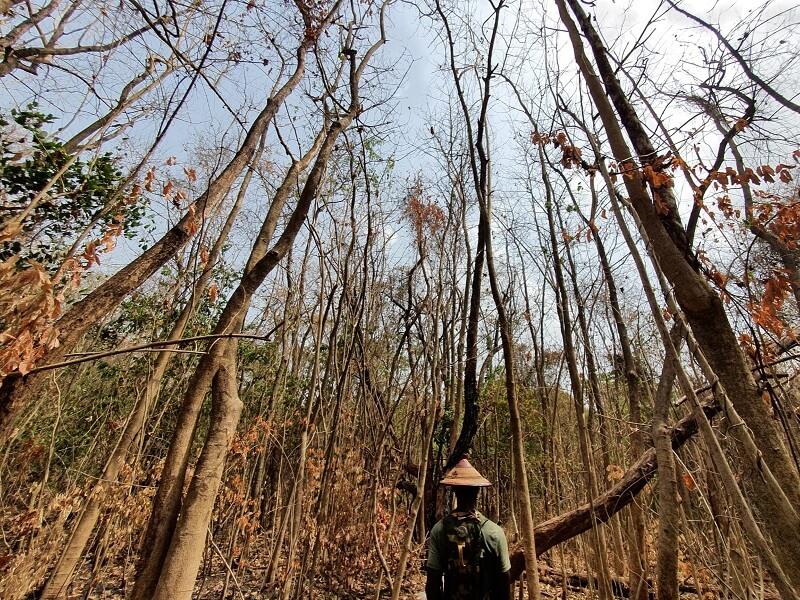 Van de gebaande paden in Bomfobiri WS Ashantie regio