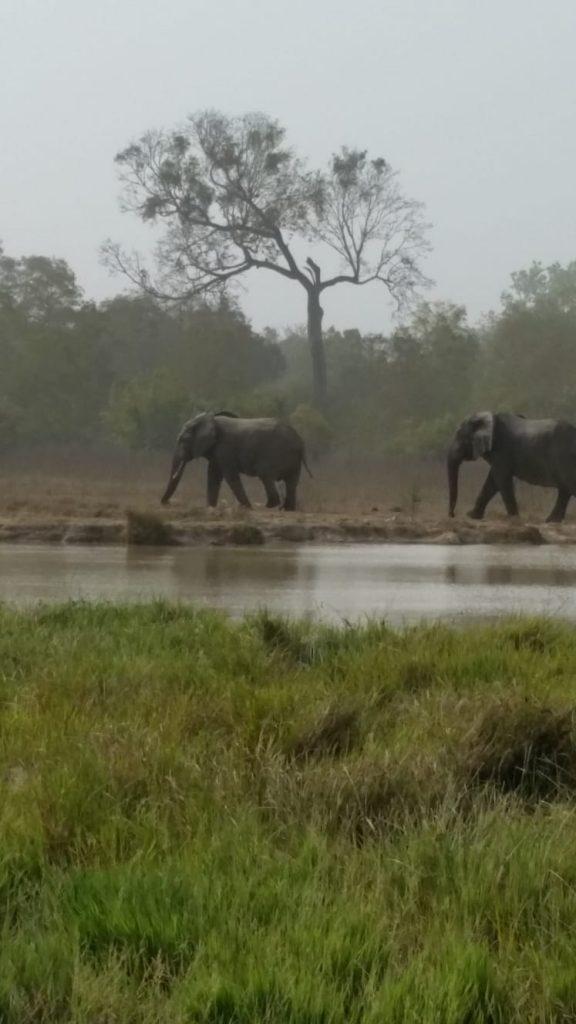 olifanten in Ghana, Mole NP drinkpoel